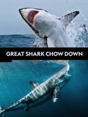 Great Shark Chow Down (2019)