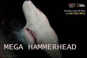 Mega Hammerhead (2016)