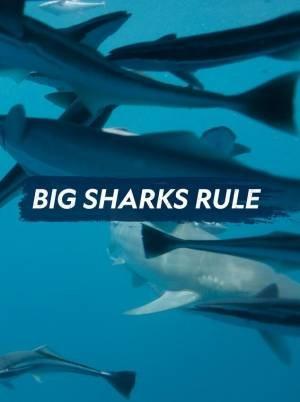 Big Sharks Rule (2018)