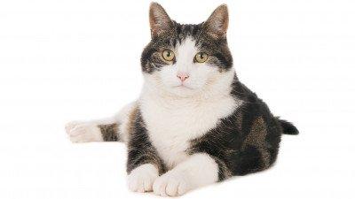 'Poeslief' roept iedereen op kattenfilmpjes te sturen