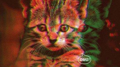 'CatVideoFest' is terug: 70 minuten lang kattenfilmpjes op het witte doek