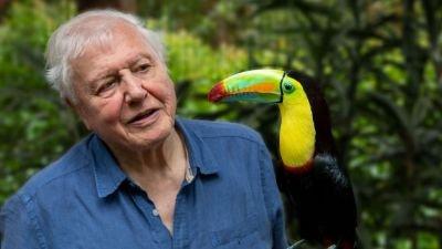 Documentaireserie 'Life in Colour with David Attenborough' nu te zien op Netflix