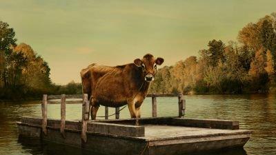 Bijzondere prijswinnende dramafilm 'First Cow' vanaf vandaag te zien in de bioscoop