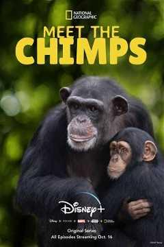 Meet the Chimps (2020–)